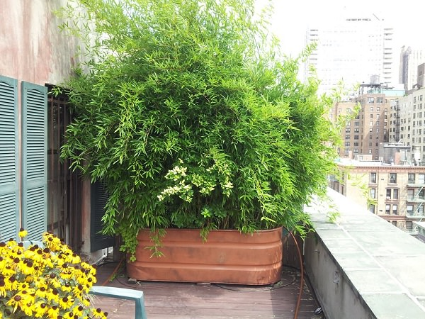 Improvement easily in the privacy of your garden 1