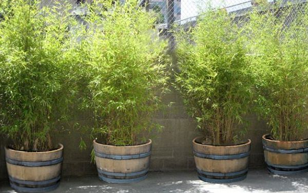 Improvement easily in the privacy of your garden 4