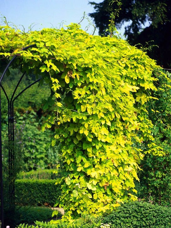 Improvement easily in the privacy of your garden 5