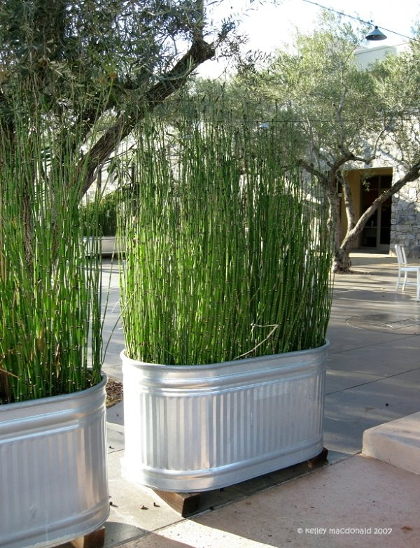 Improvement easily in the privacy of your garden 10
