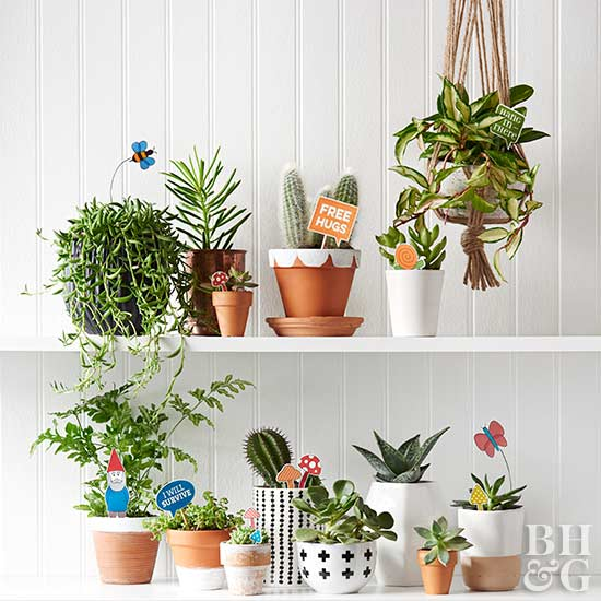 The best indoor plants and outdoor for busy people 1