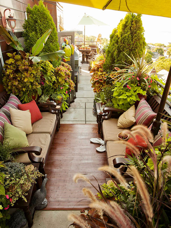 The best indoor plants and outdoor for busy people 2