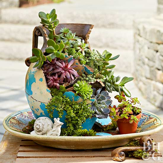 The best indoor plants and outdoor for busy people 3