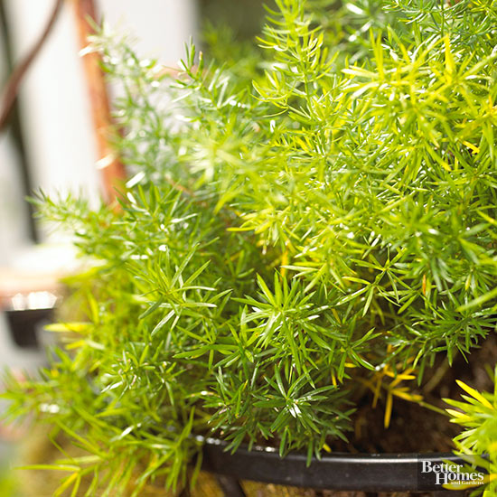 Las mejores plantas de interior y exterior para gente ocupada for Plantas exterior sol