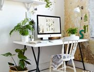 imagen Las mejores plantas de interior y exterior para gente ocupada