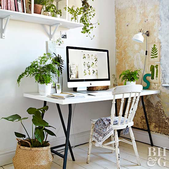 The best indoor plants and outdoor for busy people 7