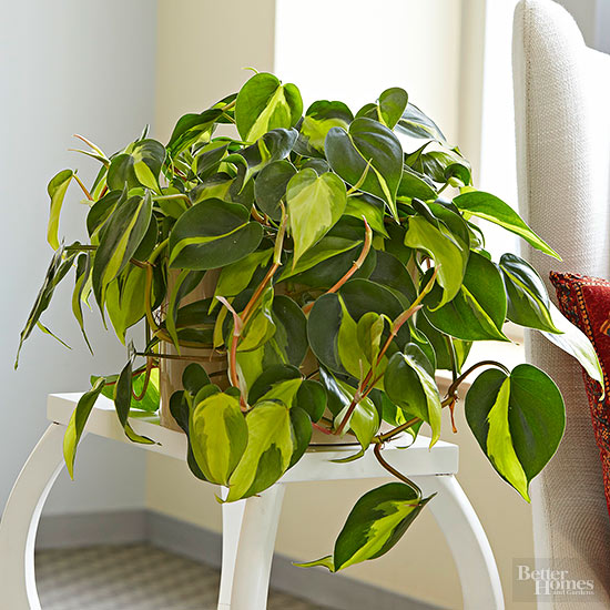 The best indoor plants and outdoor for busy people 13
