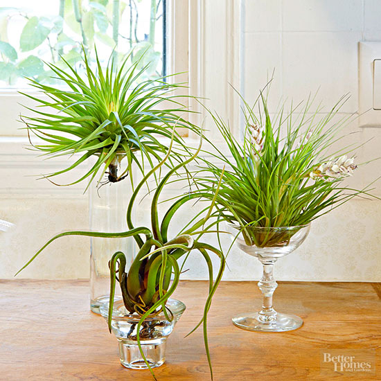 The best indoor plants and outdoor for busy people 15