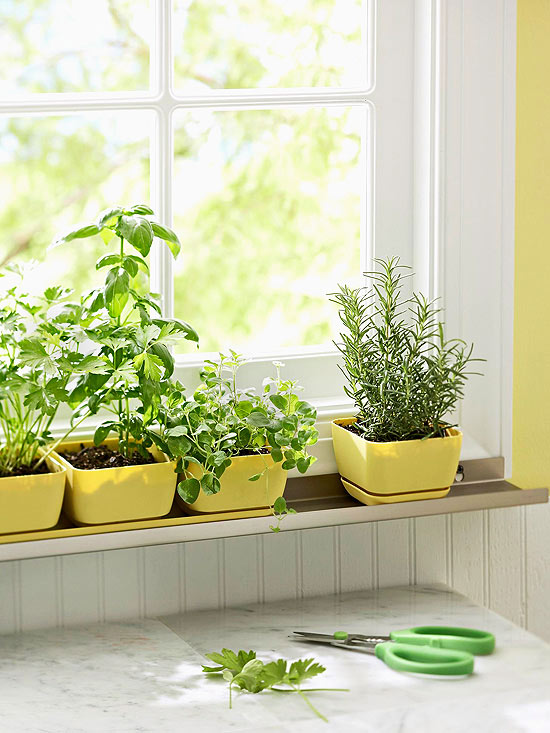 The best indoor plants and outdoor for busy people 16