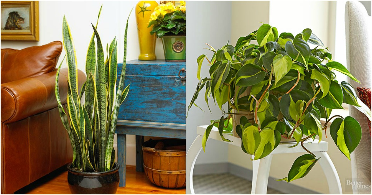 Las mejores plantas de interior y exterior para gente ocupada for Mejores plantas para interior