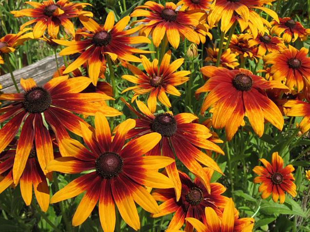 What is a plant a biennial? 1
