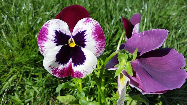 What is a plant a biennial? 4