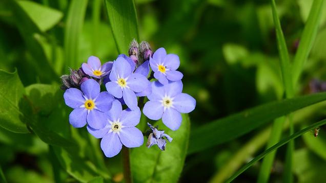 What is a plant a biennial? 5