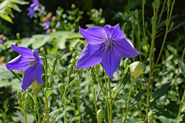 What is a plant a biennial? 7