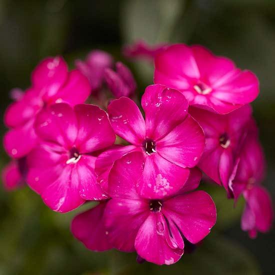 20 perennial flower for your garden 3