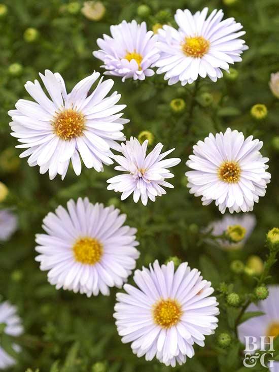 20 plantas perennes de flor para tu jard n
