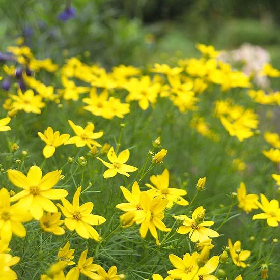 20 perennial flower for your garden 10