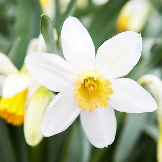 20 perennial flower for your garden 12