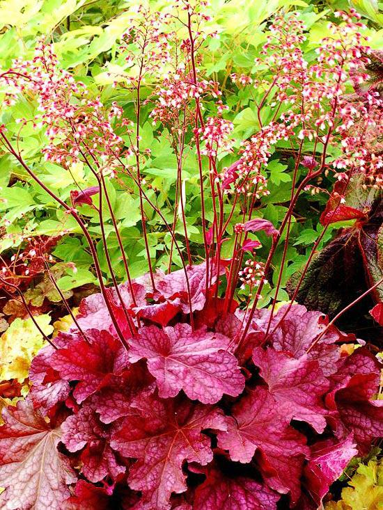 20 perennial flower for your garden 16