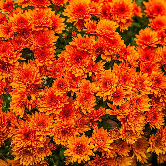 20 perennial flower for your garden jardiner a estepona - Plantas perennes exterior ...