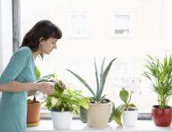 imagen 8 maneras de matar una planta de interior