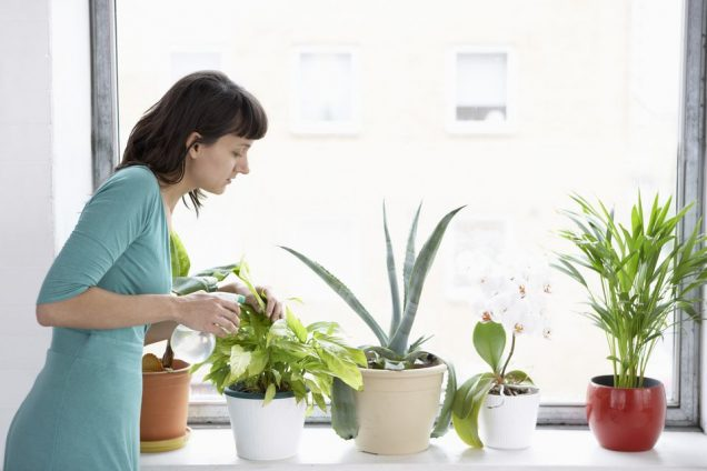 8 ways to kill an indoor plant 1