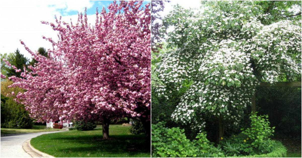 Los Mejores Arboles Para Un Jardin Pequeno - Arboles-pequeos