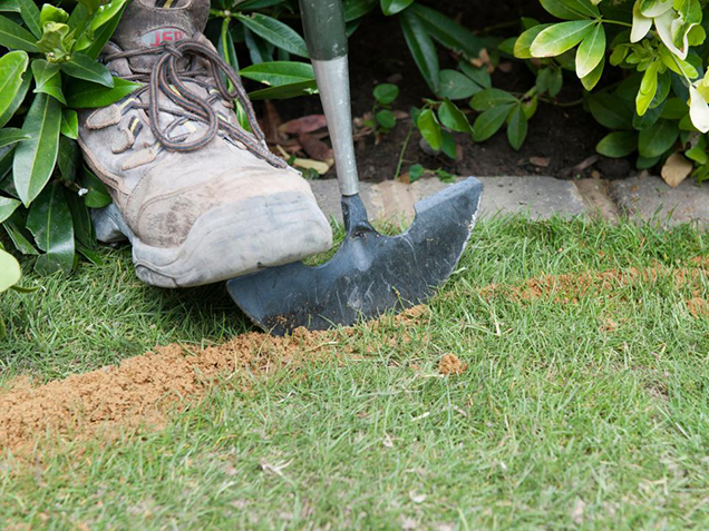 How to give shape to the lawn 3