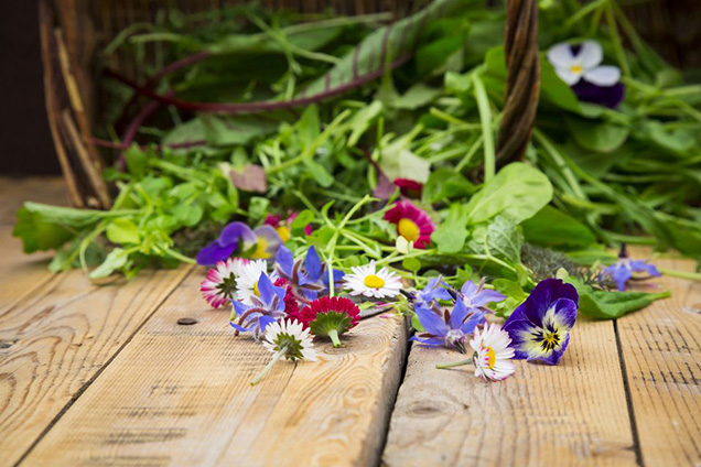 Cultivating edible flowers 1