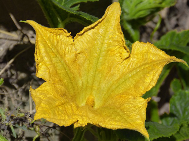 Cultivating edible flowers 10