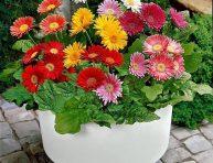 imagen Flores para un jardín de invierno