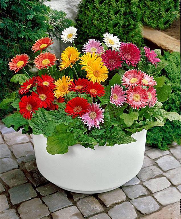 Flores para un jard n de invierno - Arboles y plantas de jardin ...