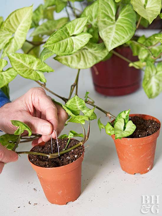 Gu a de cuidados de las plantas de interior - Cuidado de plantas de interior ...