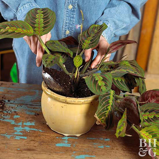 Care guide indoor plants 3