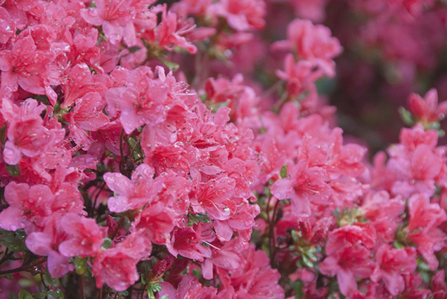 Best flower plants for people who are allergic 1
