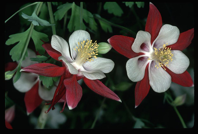 Best flower plants for people who are allergic 7