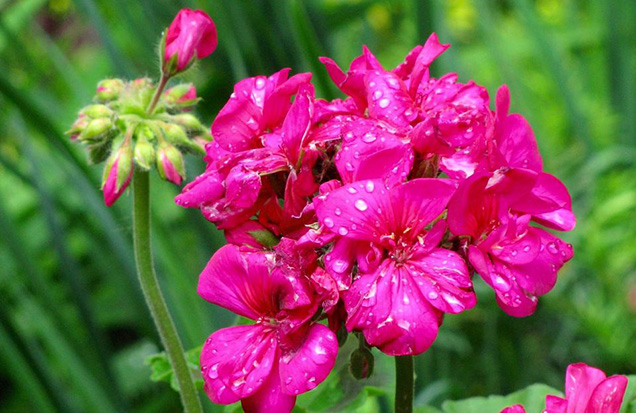 Best flower plants for people who are allergic 8