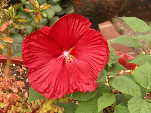 Best flower plants for people who are allergic 9