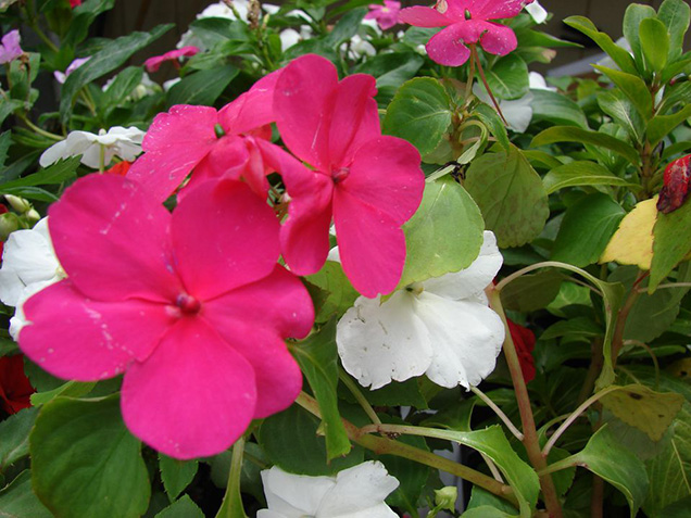 Best flower plants for people who are allergic 11