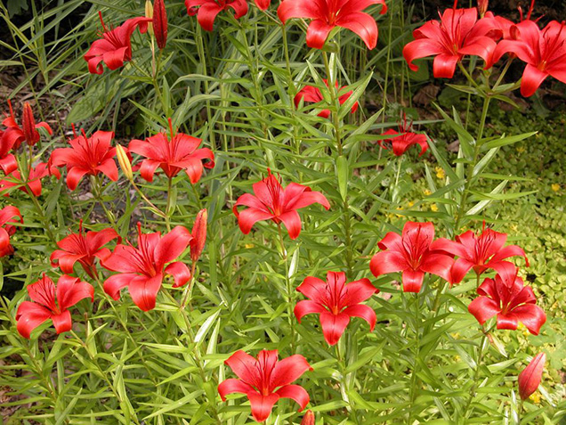 Best flower plants for people who are allergic 13