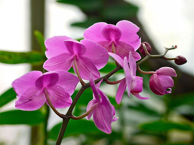 Best flower plants for people who are allergic 14