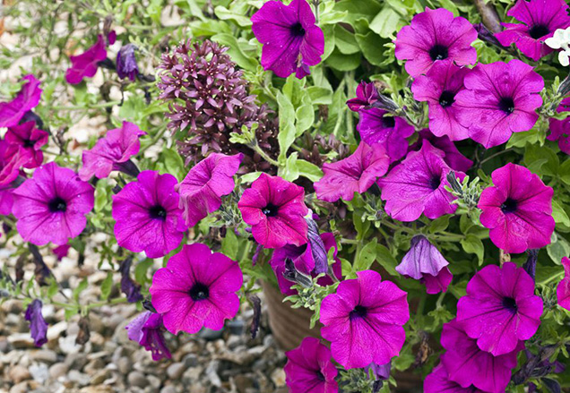 Best flower plants for people who are allergic 15