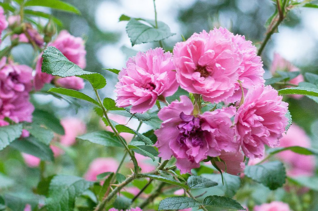 Best flower plants for people who are allergic 16