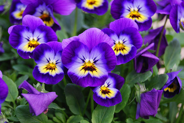 Best flower plants for people who are allergic 20