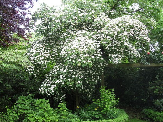 The best trees for a small garden 5