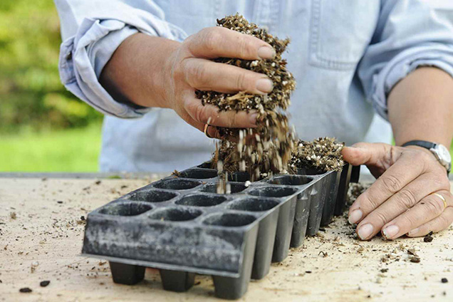 Play herb shrub by cuttings 4