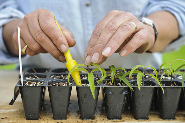 Play herb shrub by cuttings 7