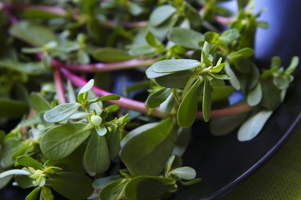 Purslane, a weed to superfood 3