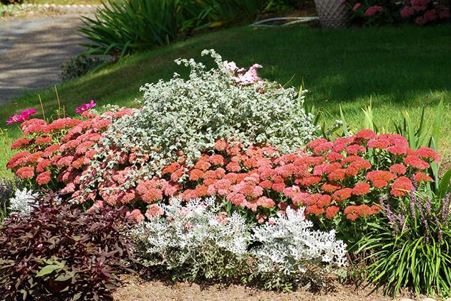 Arriates y borduras florales - Plantas para arriates ...