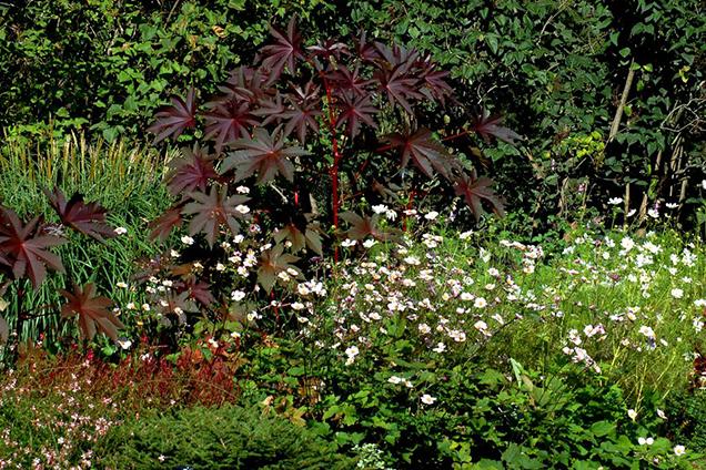 Arriates y borduras florales - Arriate plantas ...